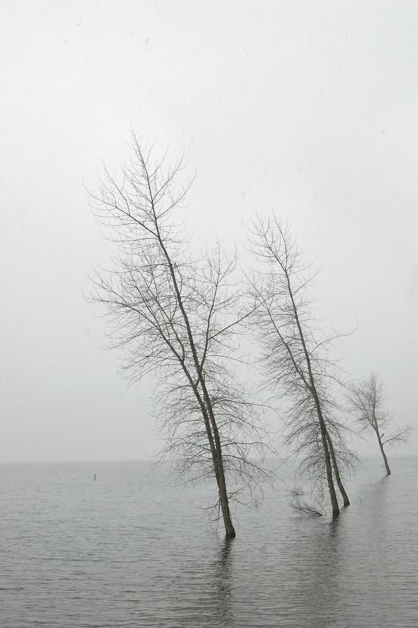 Après-midi de l'hiver photo libre de droits