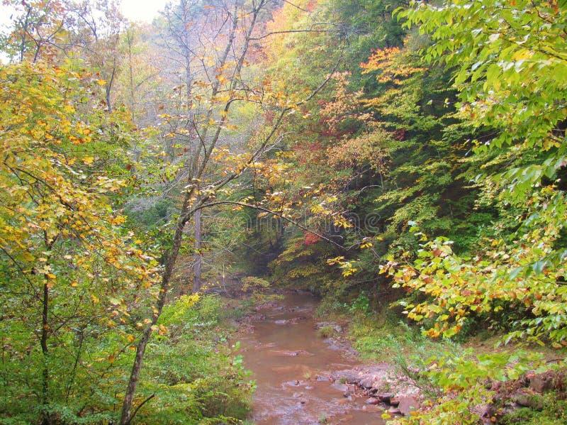 Après-midi occidental en aval de chute de Virginia Big Creek images libres de droits