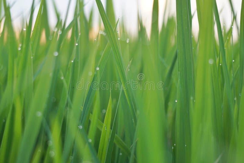 Après pluie photos stock
