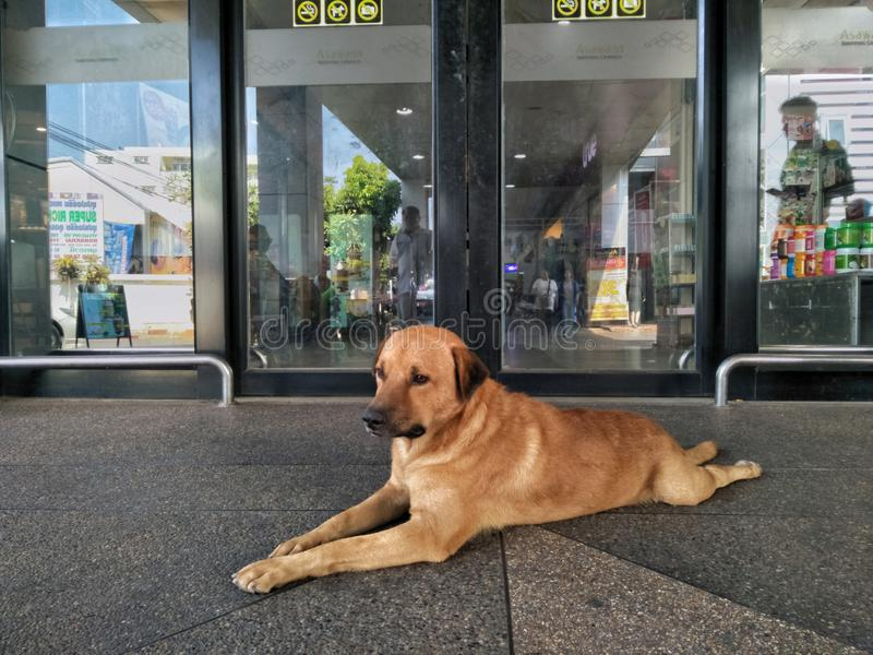 29 Apr 2019, Nong Khai, Thailand. A dog on the floor at front of the mall.  stock photos