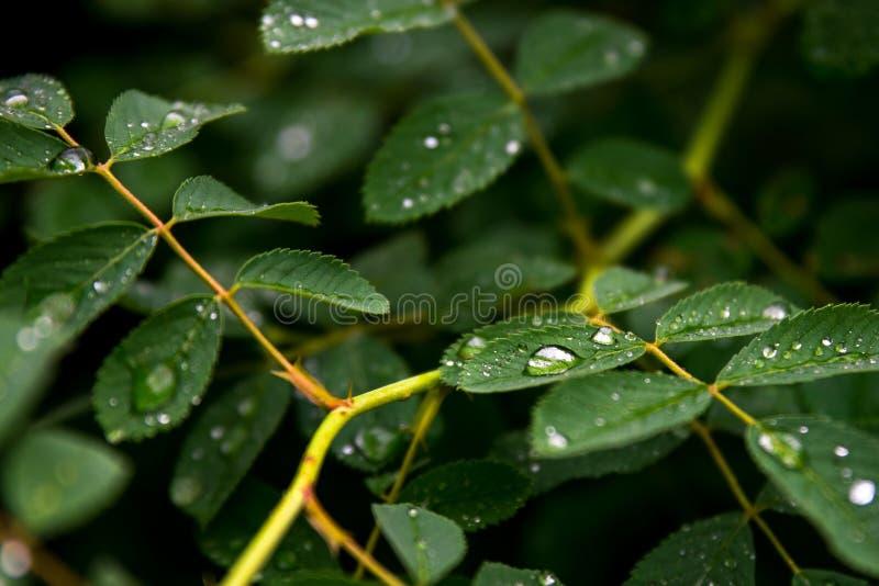 Apr?s la pluie photographie stock libre de droits