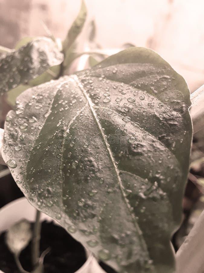 Apr?s pluie images stock