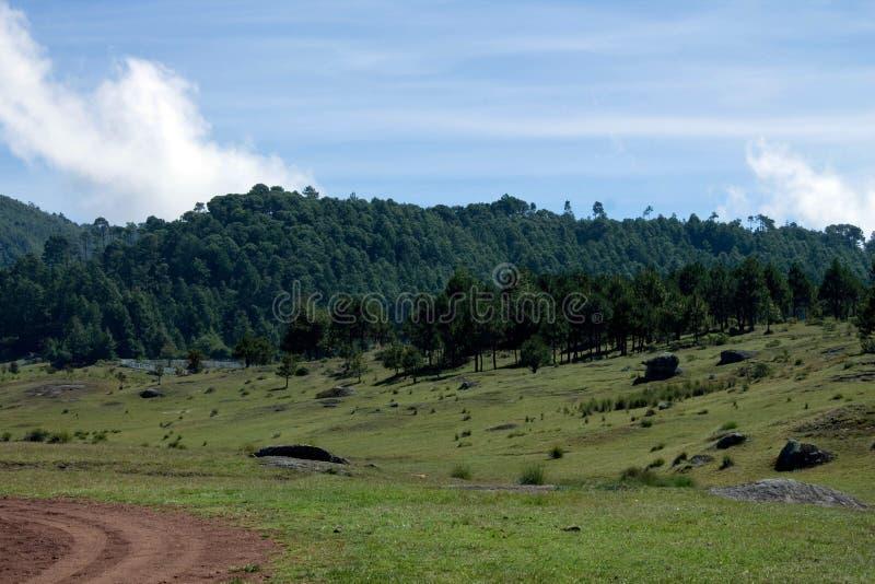 Apra il campo con erba verde fotografie stock