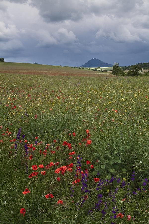 Apra il campo dei fiori variopinti fotografia stock