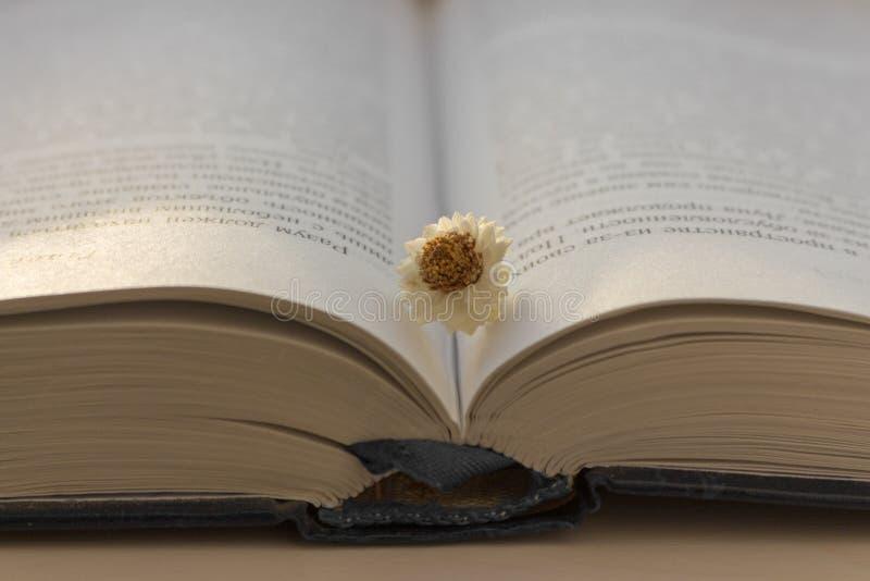 Apra il libro blu con il fiore stagionato bianco sulla tavola di legno bianca Istruzione e concetto di apprendimento Fondo della  fotografia stock libera da diritti