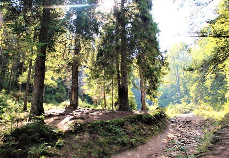 Aprecie seu curso com montanhas de Carpathians, beleza da vila imagem de stock royalty free