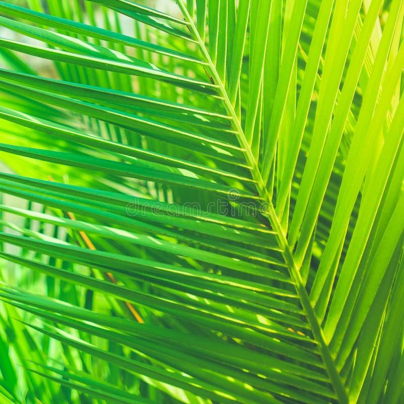 Aprecie um sonho tropical imagens de stock