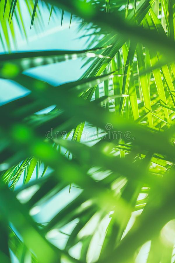 Aprecie um sonho tropical foto de stock royalty free