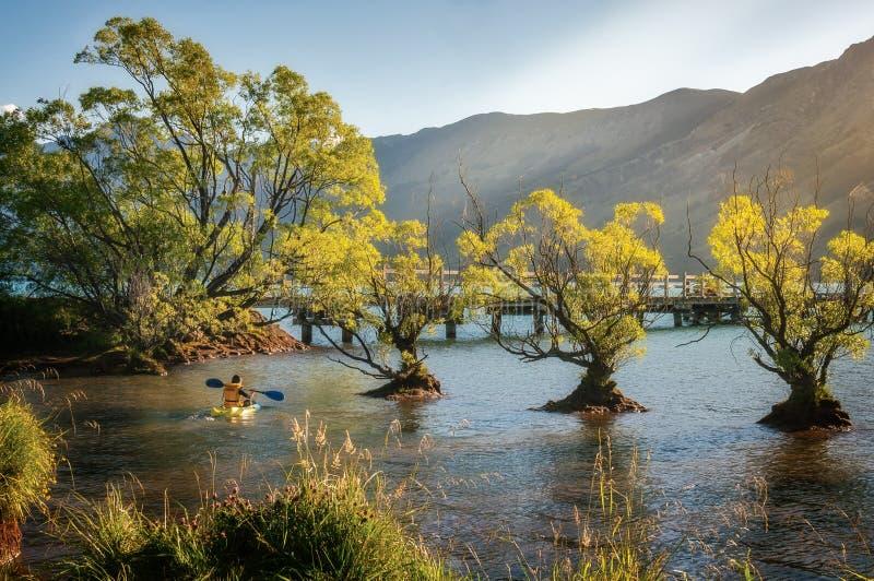 Aprendiendo batirse en agua poco profunda en el lago Wakatipu, Glenorchy, NZ imagenes de archivo