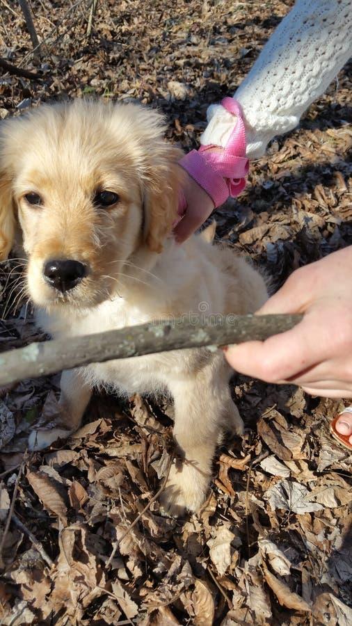 Aprendizagem do cachorrinho fotografia de stock