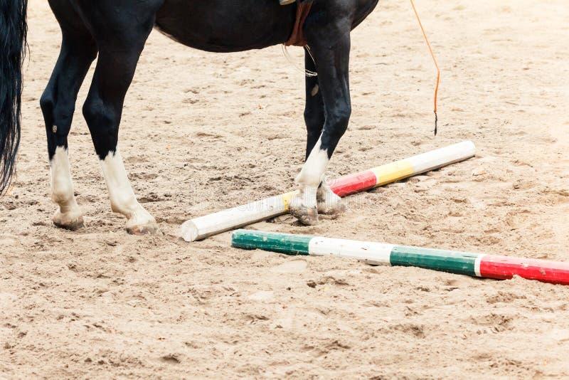 Aprendizaje de equitación El instructor enseña al Equestrian adolescente imagenes de archivo
