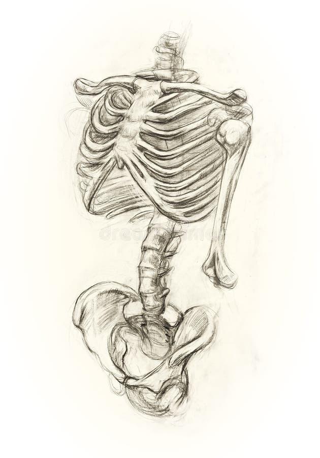 Aprendizaje del esqueleto del dibujo stock de ilustración