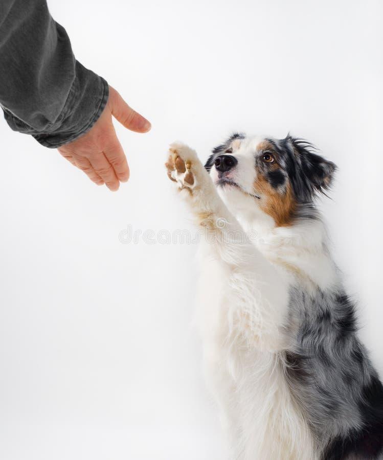 Apretón de manos del perro y del ser humano.