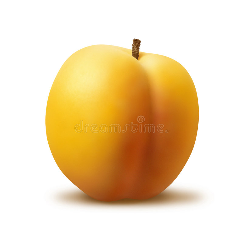 Apricot. On a white background stock photography