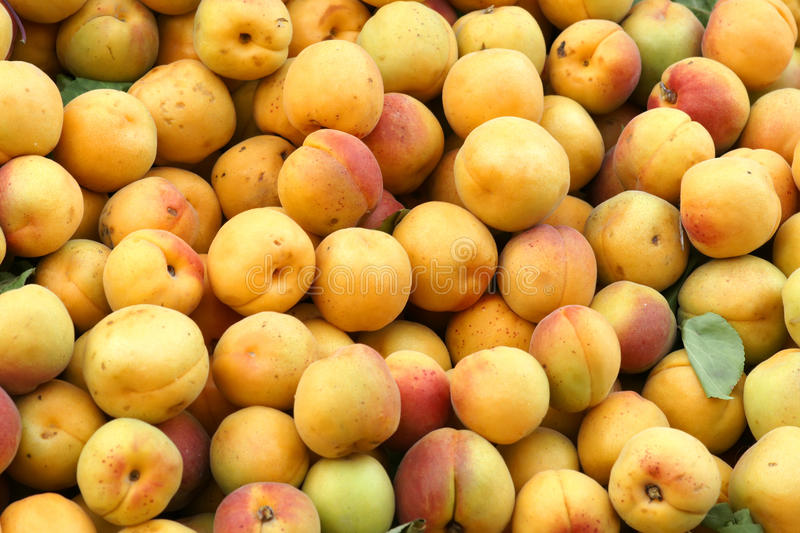 Download Apricot stock photo. Image of eating, food, apricot, ripe - 19570884