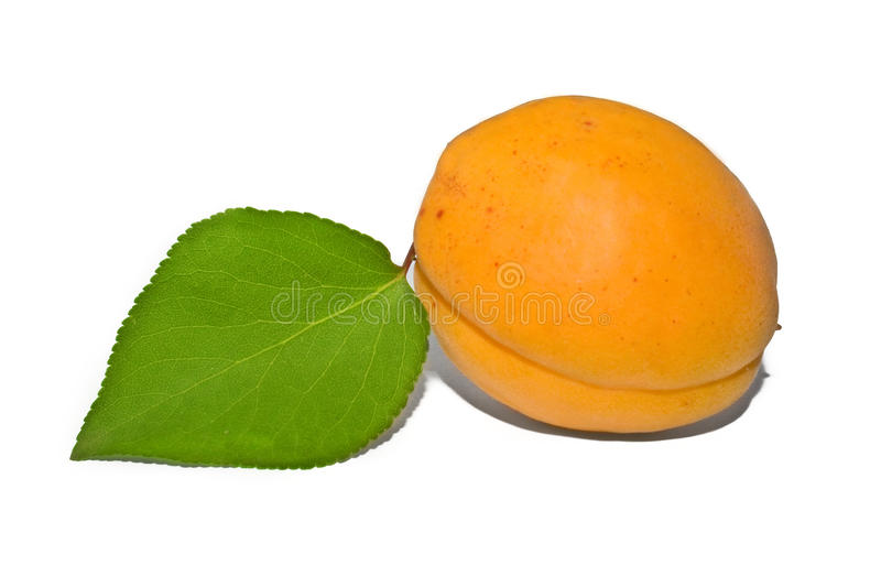 Download Apricot Royalty Free Stock Image - Image: 20989416