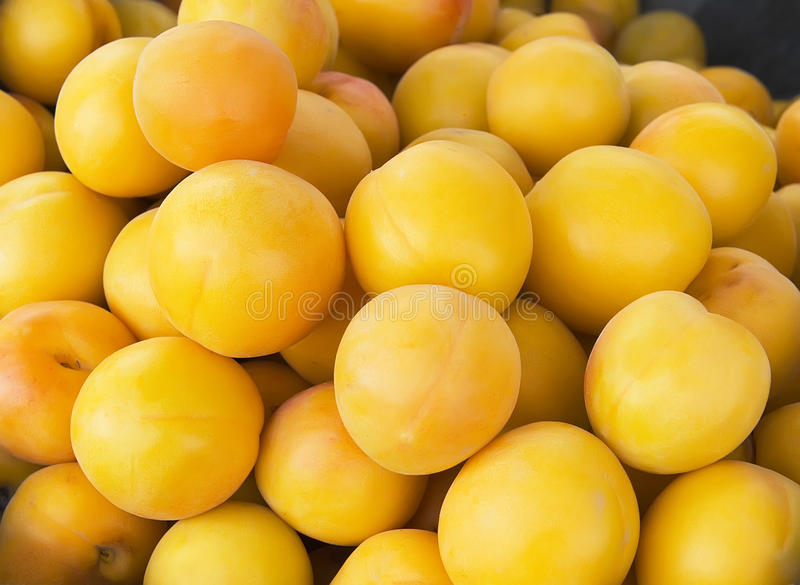 Download Apricot stock image. Image of fruit, china, delicious - 21089515