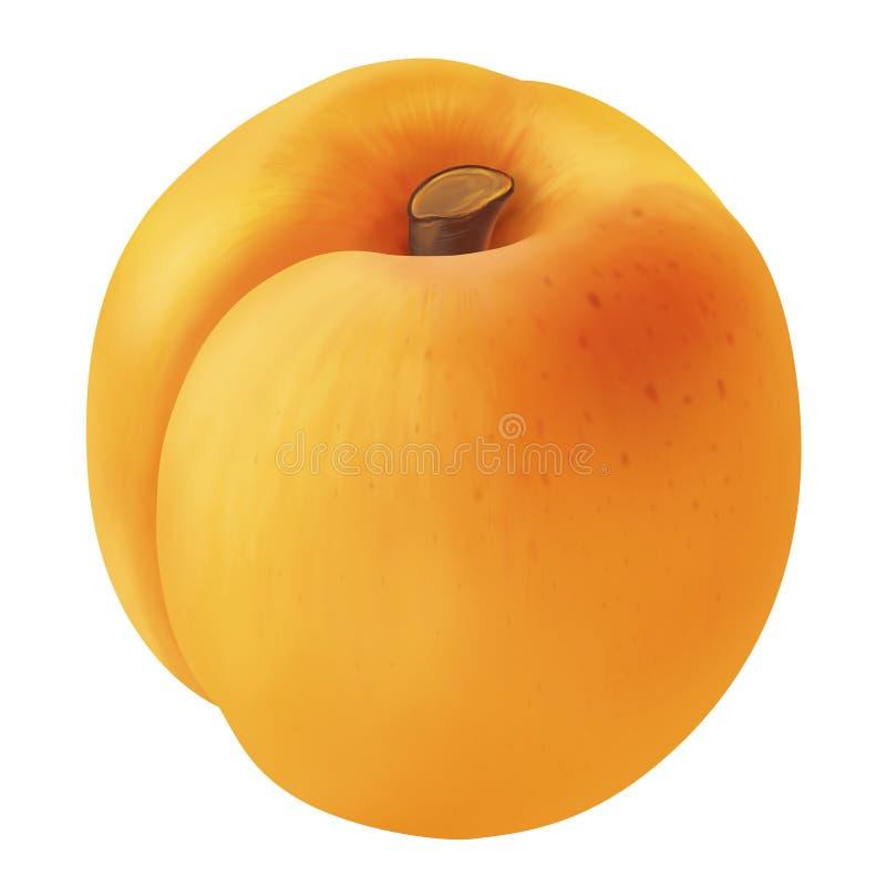 Apricot royalty free illustration
