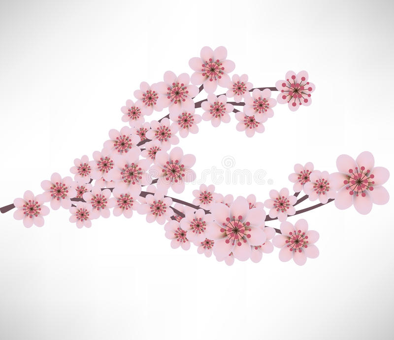 Apricot flowers branch stock illustration