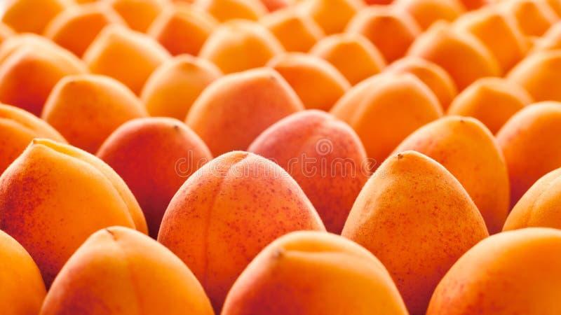 Apricot fruit stock photography