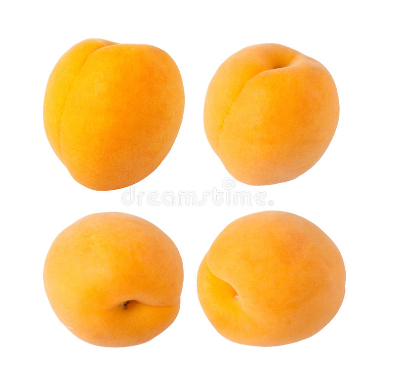 Apricot stock photography