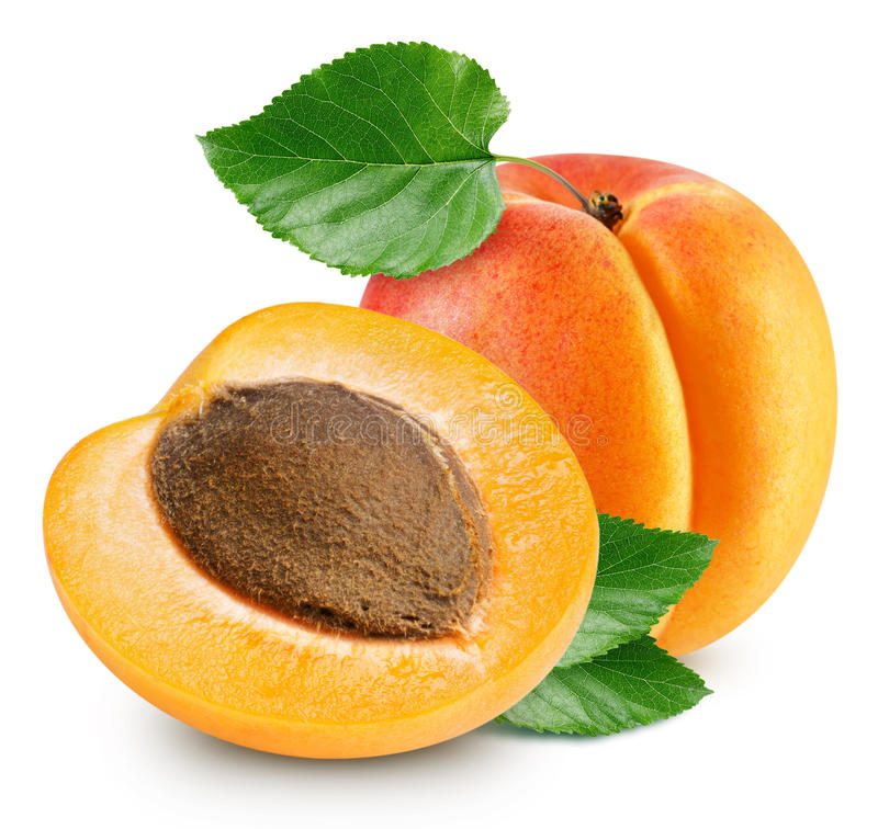 Apricot fruits isolated royalty free stock photos
