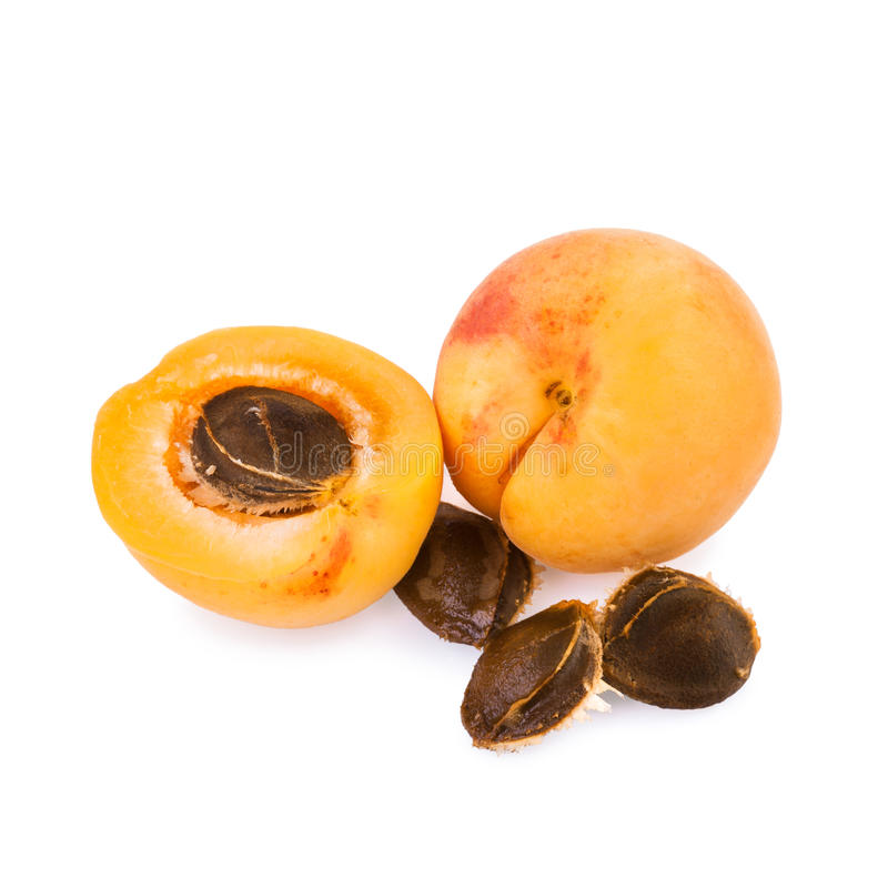 Apricot and half of fruit with fruits core stock image