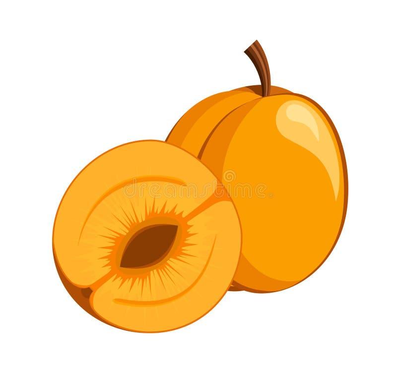 Apricot icon stock illustration