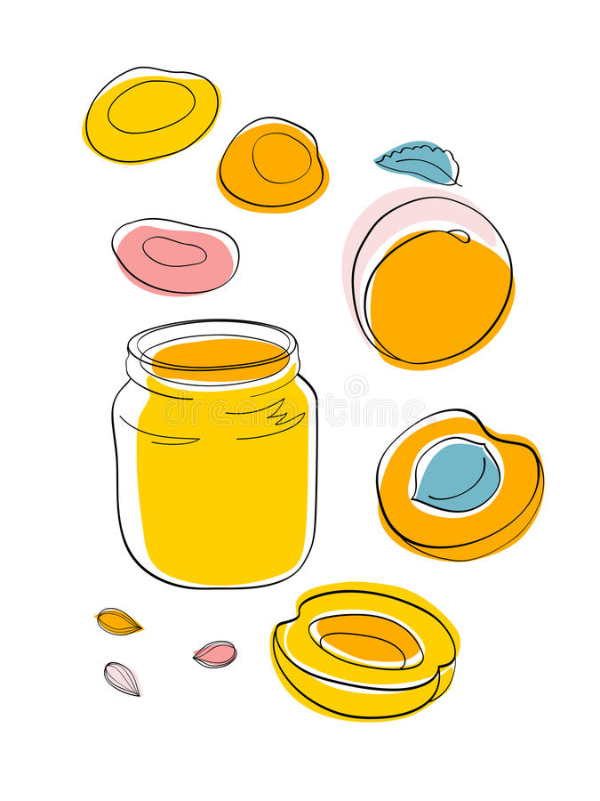 Apricot jam and dried apricots. Vector sketch Apricot jam and dried apricots vector illustration