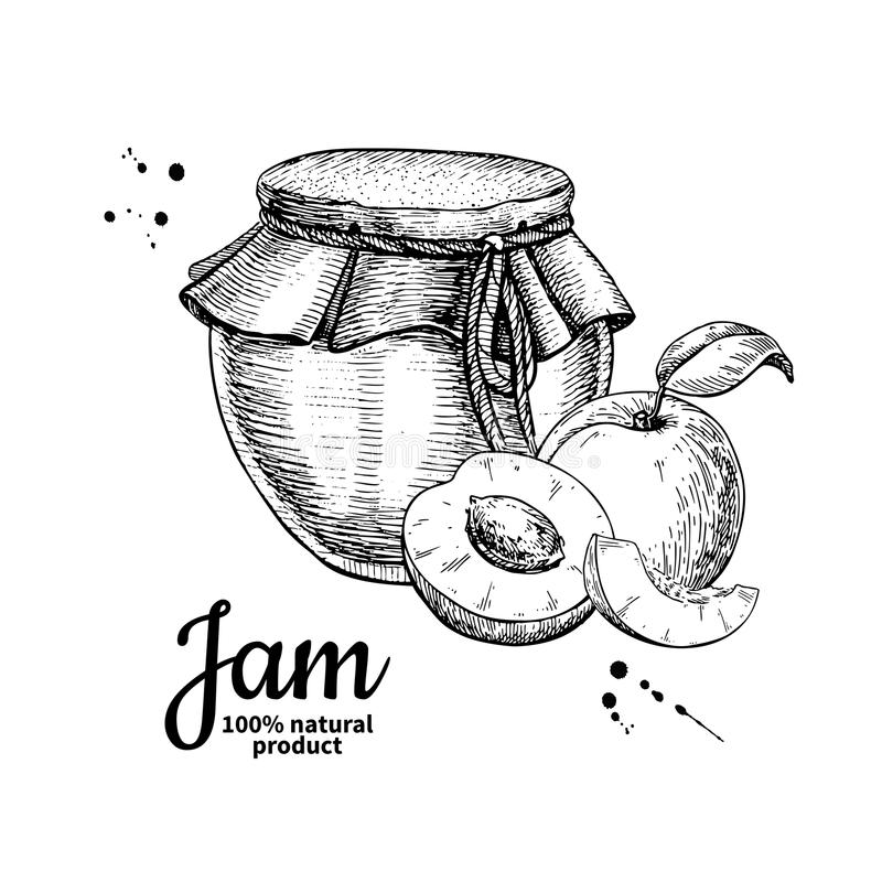 Apricot jam glass jar vector drawing. Fruit Jelly and marmalade. Hand drawn food illustration. Sketch style vintage objects for label, icon, packaging design vector illustration