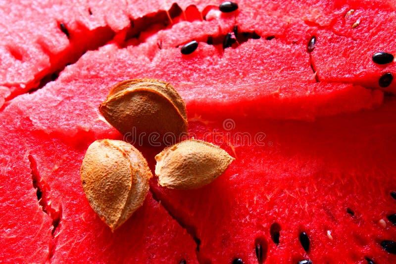 Apricot kernel on watermelon