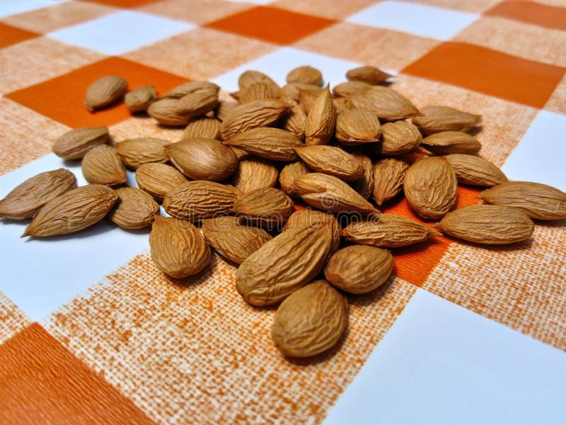 Apricot kernels on tablecloth. Apricot kernels on orange white tablecloth from up close stock photos