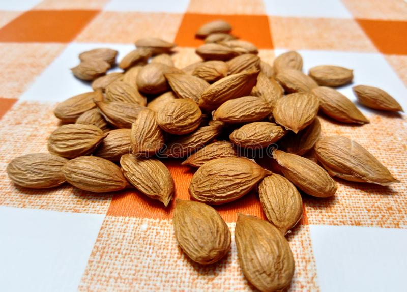 Apricot kernels on tablecloth. Apricot kernels on orange white tablecloth from up close royalty free stock images