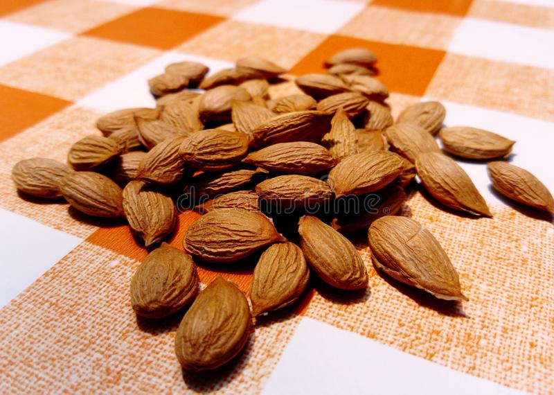 Apricot kernels on tablecloth. Apricot kernels on orange white tablecloth from up close royalty free stock photos