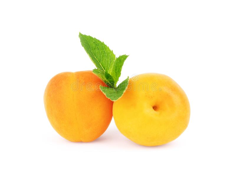 Apricot with a sprig of mint on a white background.  stock photography