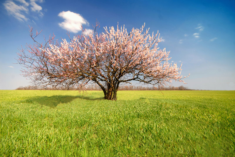 Download Apricot tree, day stock photo. Image of become, color - 2252558