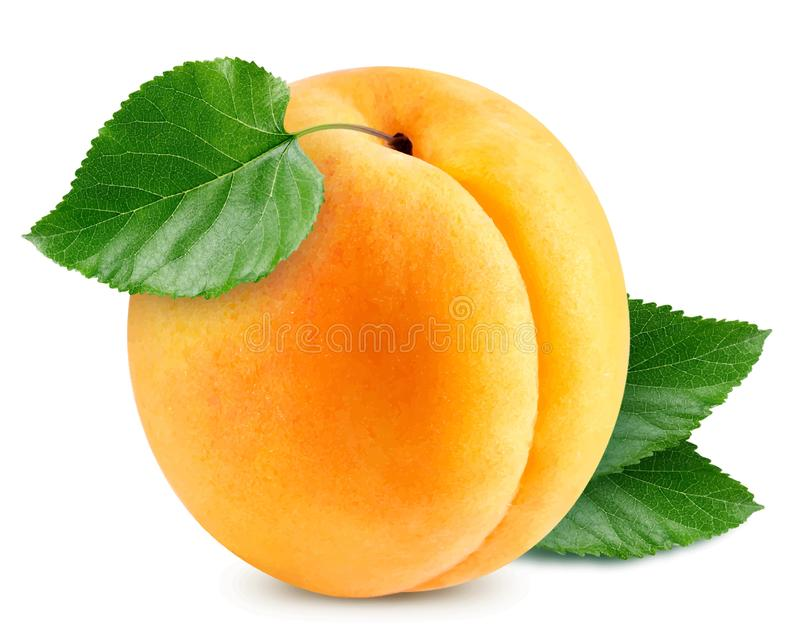 Apricot vector illustration royalty free illustration