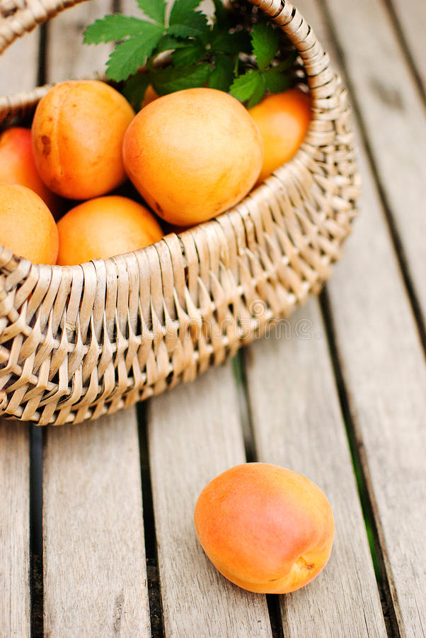 Download Apricots stock photo. Image of apricots, basket, ingredients - 25922638