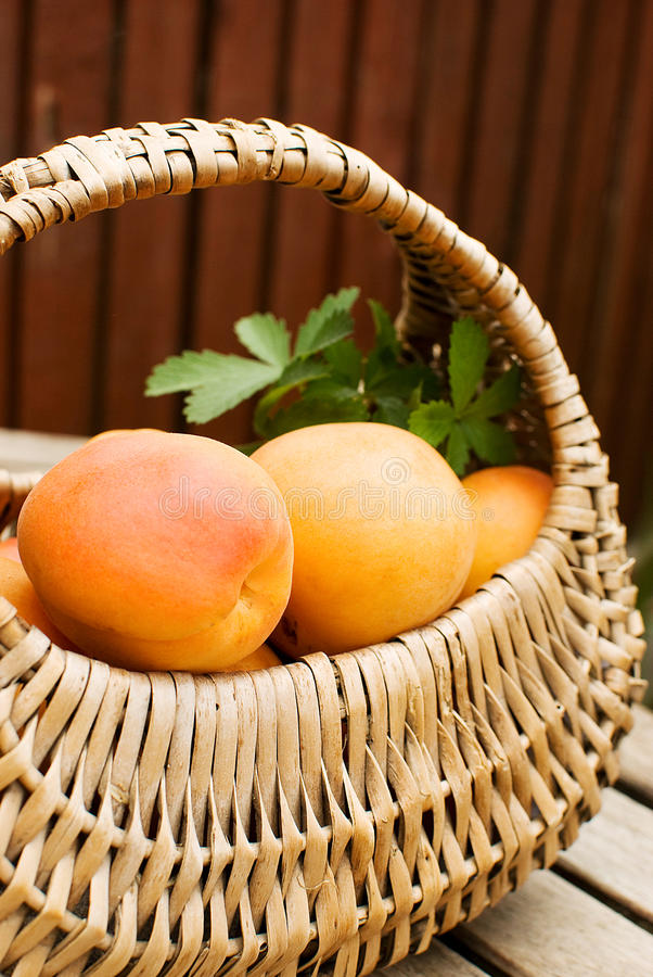 Download Apricots stock photo. Image of heap, juicy, ingredients - 25922656