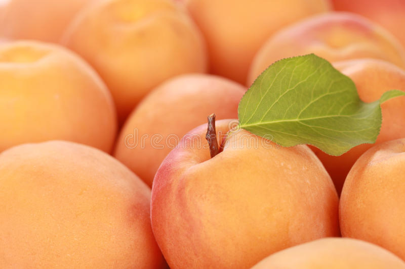 Download Apricots stock image. Image of macro, apricot, up, organic - 26575995