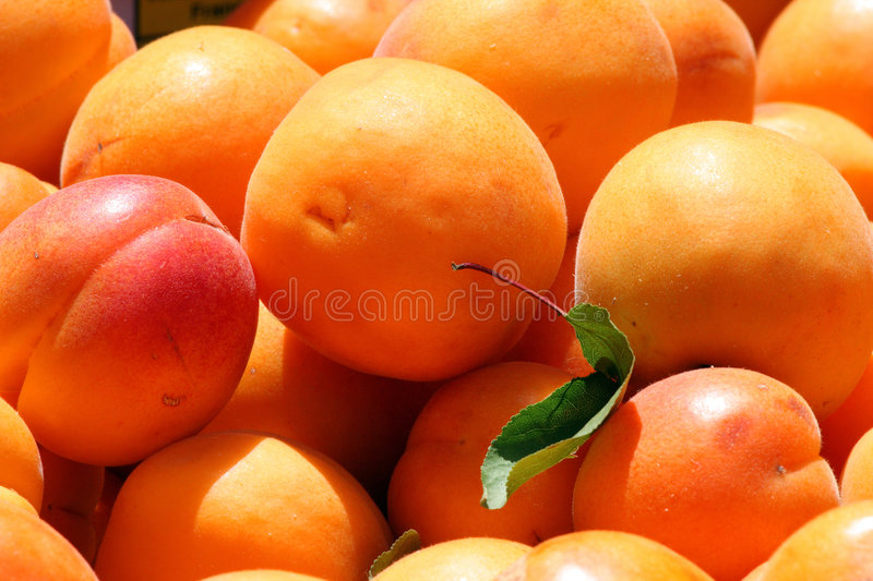 Apricots. Sweet fresh apricots at a market stall in Provence stock photo
