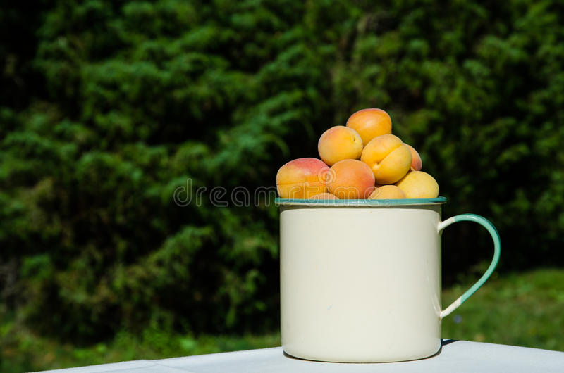 Apricots In A Cup Royalty Free Stock Photos