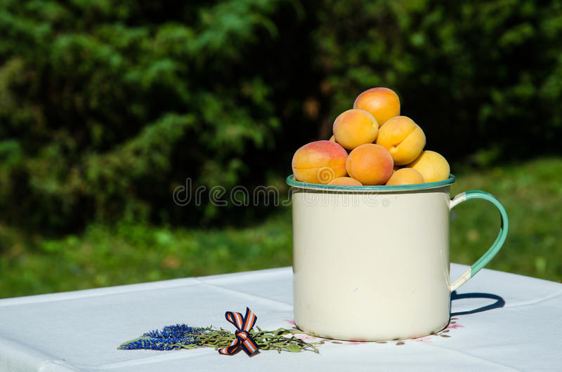 Download Apricots On Decorated Table Stock Photo - Image of color, lifestyle: 33428516