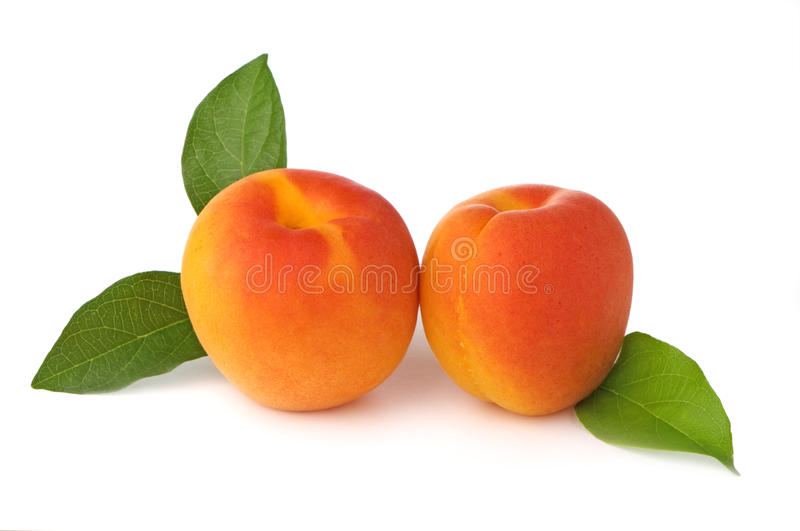 Apricots Fresh From The Tree stock photography