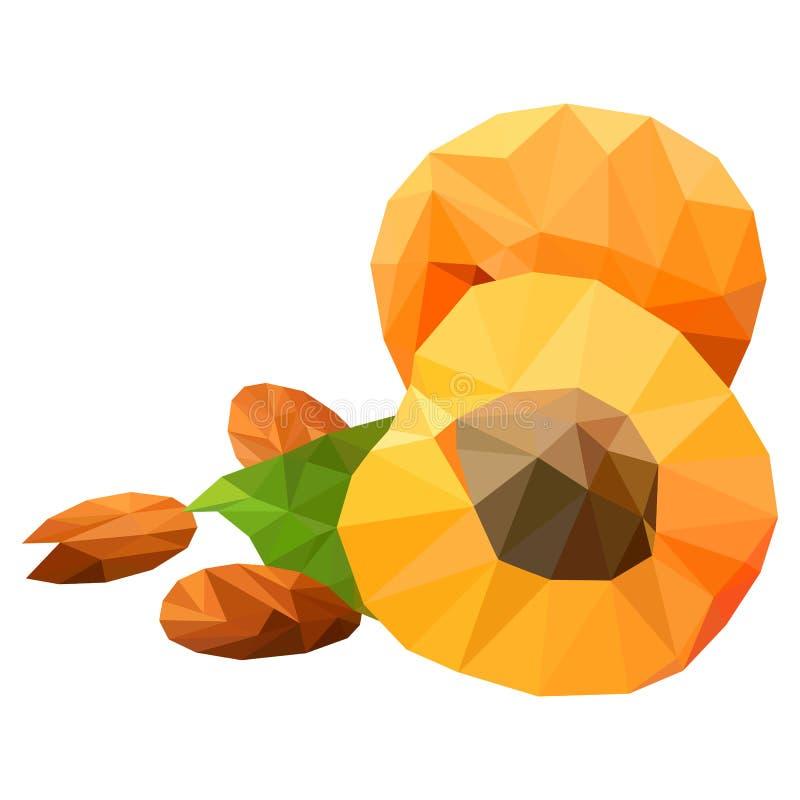 Apricots, triangulation, sur fond blanc objet en poly bas illustration stock