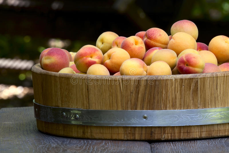 Apricots in a wooden bowl royalty free stock photos
