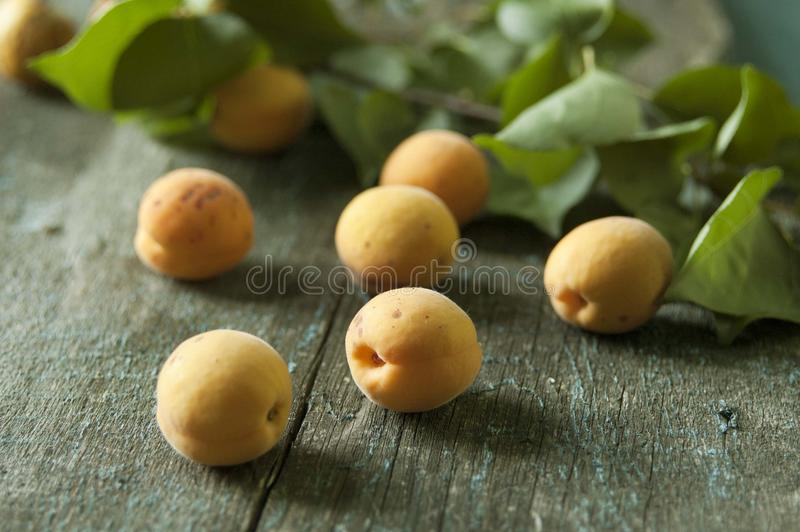 Apricots. Yellow and green leaves royalty free stock photography