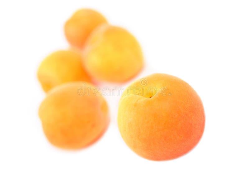 aprikos arkivfoto