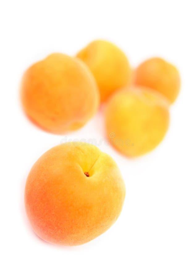 aprikos royaltyfri bild