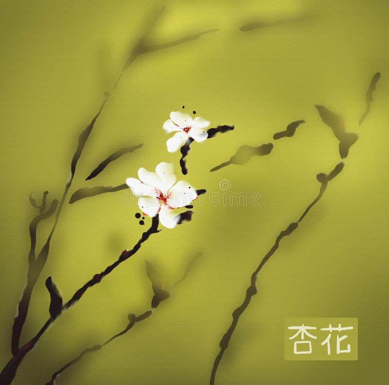 aprikosblomningvattenfärg arkivfoton